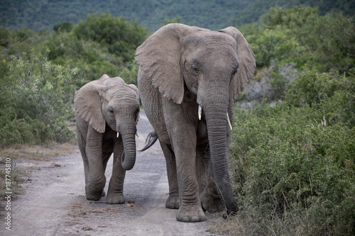 Elephant mother and child walking up a gravel road