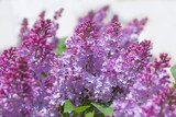 spring blooming of lilac blossoms on branches - 187763848