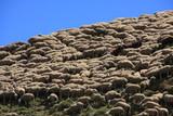 Une montagne de moutons - 187771296