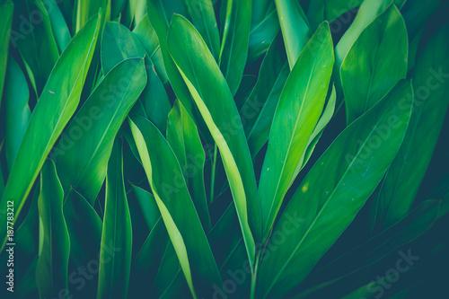 Świeża tropikalna zieleń opuszcza tło