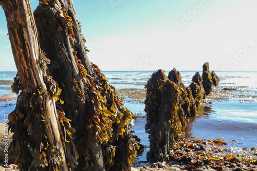 Water, seaweed