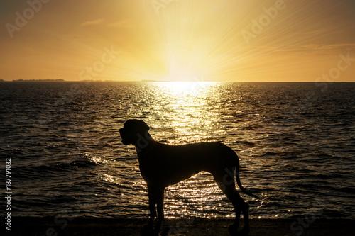 Staande foto Noordzee Deutsche Dogge an der Nordsee