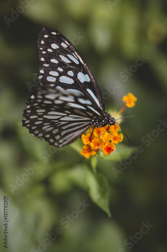orange flower butterfly - 187792801