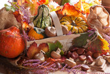 Courges_Automne