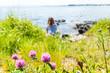 Closeup of pink clover flowers in summer with back of young woman sitting on Maine Coast near Portland, Cape Elizabeth, Kennebunkport beach shore