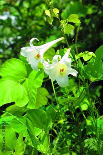 Fotobehang Groene 公園の花の風景2