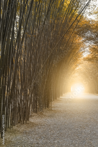 bamboo forest - 187850415