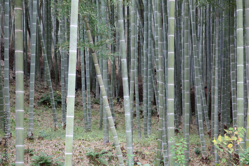 Aluminium Bamboe Bamboo Groves in kyoto at japan