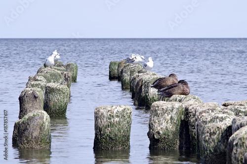 ptaki siedzące na falochronie