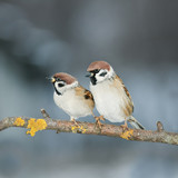 pair of lovers of birds sitting on a branch in the garden