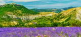 Lavender field in Provence - 187867297