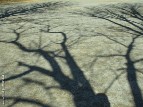Foto Murales 公園の枯れ木の影