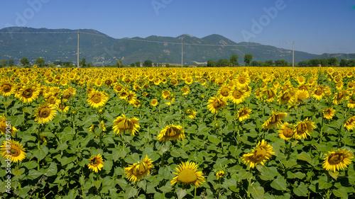 Foto Murales Country landscape between Rieti (Lazio) and Terni (Umbria)