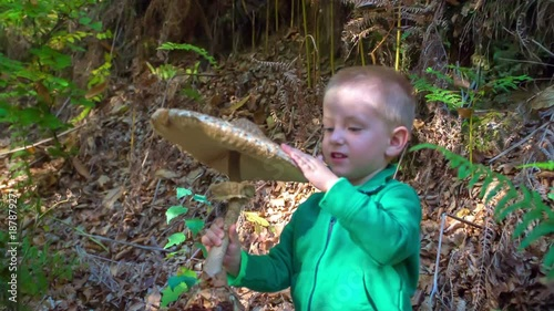 A young boy is gently touching a big mushroom in his hands. He is walking in the forest together with his family.