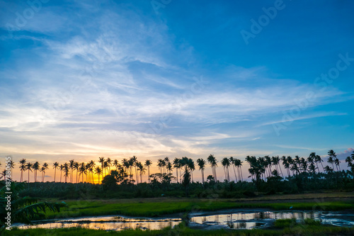 Foto Murales Beautiful Colorful Sunset Over Palm Trees And Field At Summer.