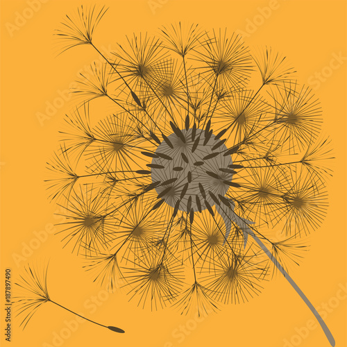 Obraz na płótnie Abstract background of a dandelion for design.