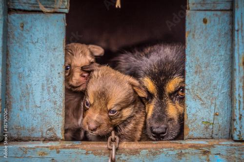 Fototapeta little puppy