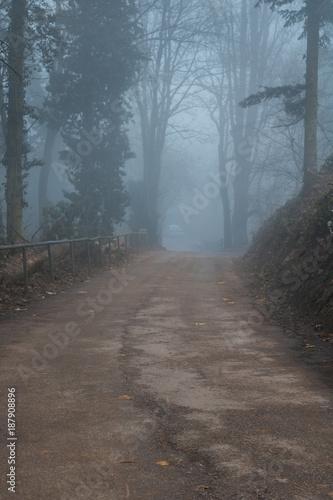 Road in forest Camino otoñal al amanecer