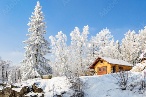 Aluminium Blauwe hemel winter landscape with snow on trees
