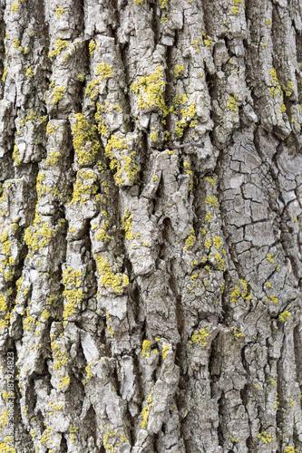 Tree bark - 187924823