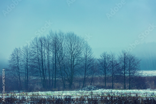 Foto Murales Winter landscape. Trees without leaves on the snowy field