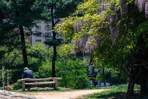 Foto op Canvas Natuur homem sozinho no parque