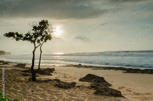 Aluminium Strand Dwarf Umbrella Tree at sunset on Sunset Beach, Oahu, Hawaii with large surf