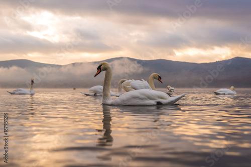Fotobehang Zalm White Swan feeling romantic and love at Lake Yamanaka with Mt. Fuji background