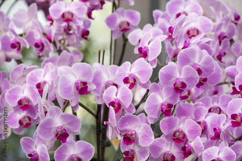 Orchid green house - 187952893