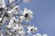 The awakening of nature in spring