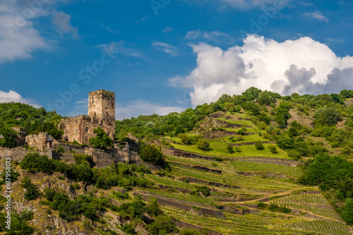 Poster Wijngaard Gutenfels Castle and vineyards at Rhine Valley near Kaub, Germany.