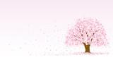 桜の木 - 187958238