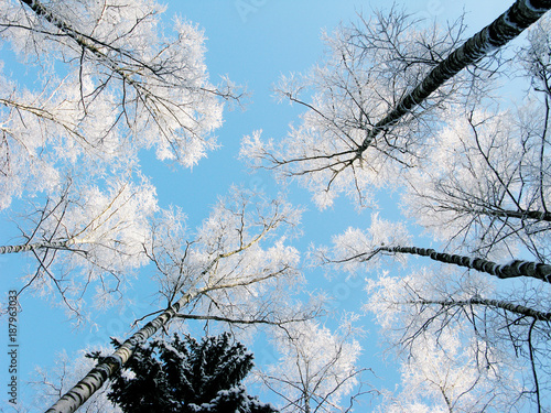 Fotobehang Pool winter landscape forest in snow frost with sunny light beams