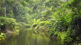 Slow Moving River through Tropical Nature Park, with Sound - 187967425