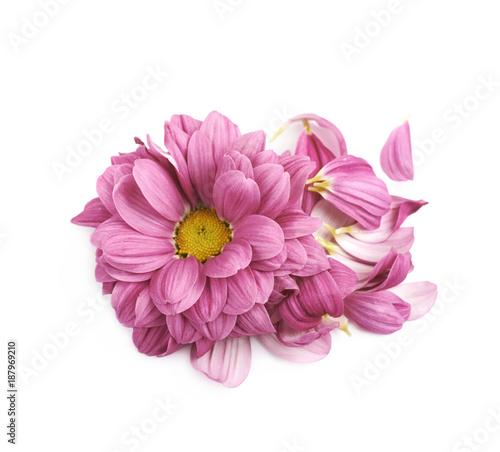 Fotobehang Gerbera Gerbera flower bud isolated