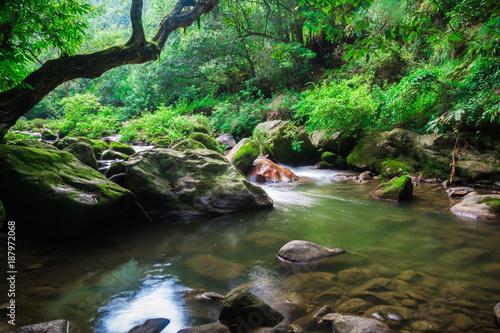 Papiers peints Rivière de la forêt Tropical forest fresh river