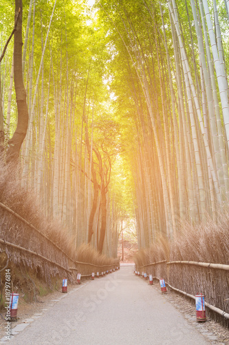 Aluminium Bamboe Bamboo garden in forest in the park, Kyoto Japan, natural landscape background