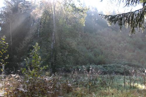 Papiers peints Rivière de la forêt Hirschberg Saale