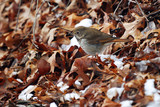 Birds on winter leaves - 188026226