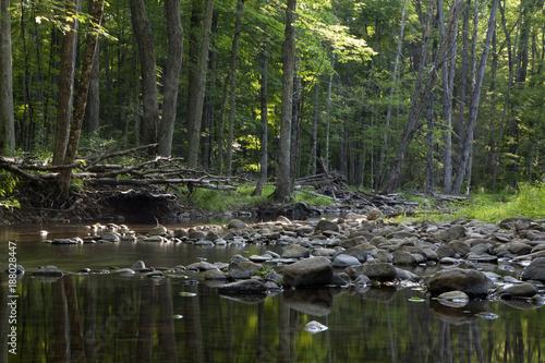 Papiers peints Rivière de la forêt Summer river.