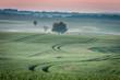 Dawn at foggy green field in summer, Europe