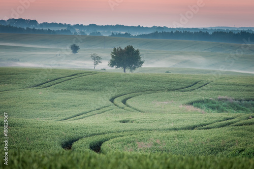 Foto op Plexiglas Ochtendgloren Dawn at foggy green field in summer, Europe
