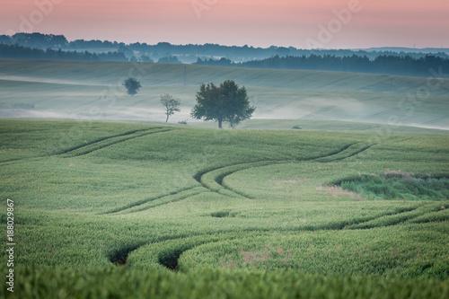 Foto Murales Dawn at foggy green field in summer, Europe