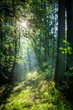 Sunrise in the green forest in summer, Poland - 188030085