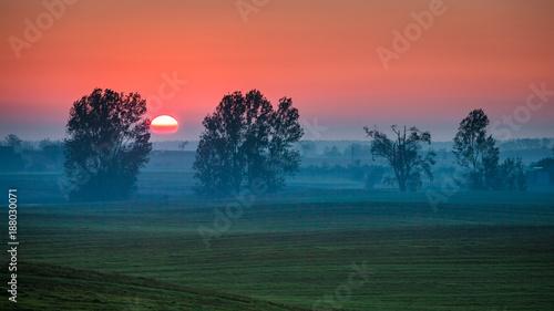 Fotobehang Landschappen Beautiful sunrise at foggy green field in summer