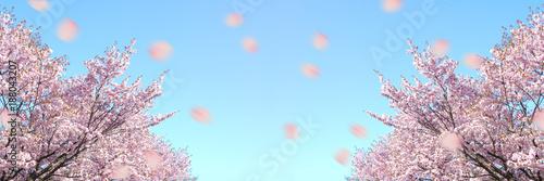 Foto op Plexiglas Lichtroze 北海道の桜