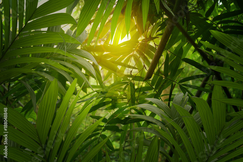 Bamboo leaves and palm tree forest background
