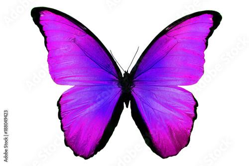 Aluminium Vlinder бабочка фиолетового цвета изолировано на белом