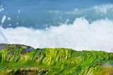 Seaweed on the bank of the Mediterranean Sea