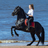 Horse woman and rearing Andalusian horse on beach - 188062830